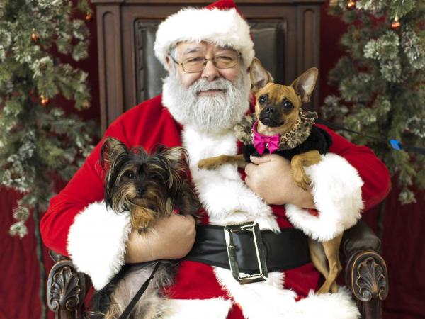 Santa with two dogs