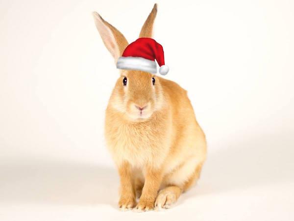 Petunia the bunny with santa hat