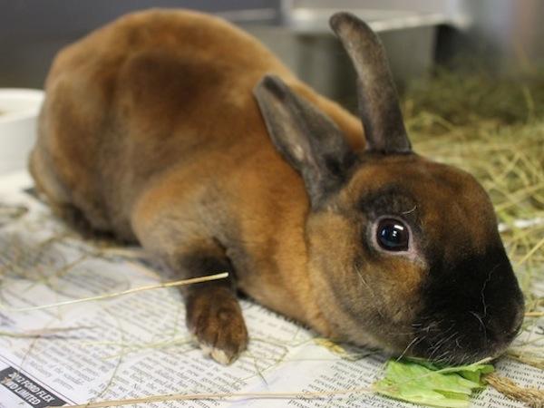 Rusty the bunny