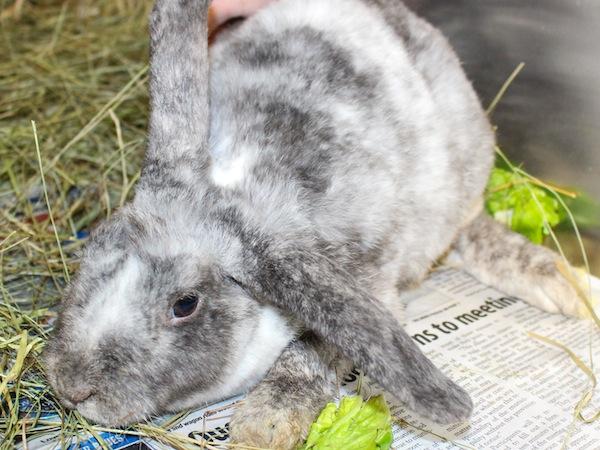 Poppy the bunny