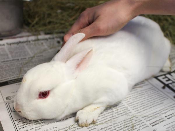 Rosie the bunny