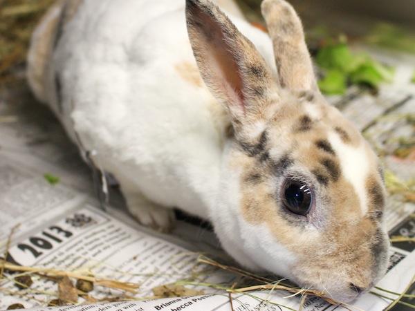 Dolly the bunny