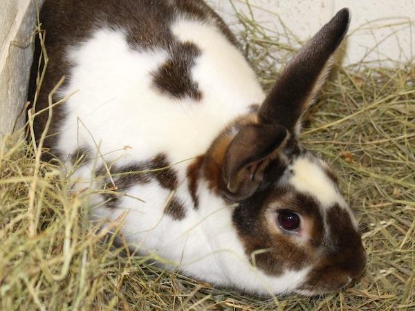 Soloman the bunny