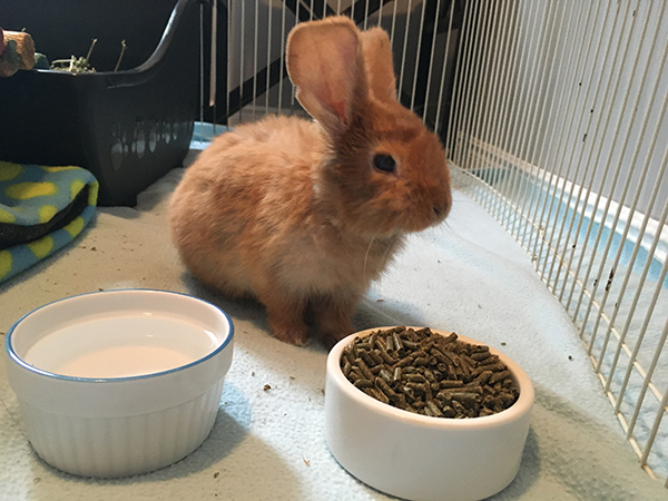 Cinnabun the rabbit
