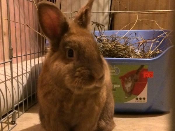 Denny the bunny