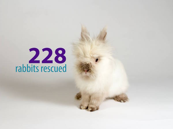 228 rabbits rescued