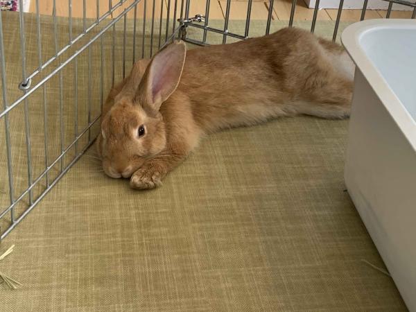 Rabbit safe inside