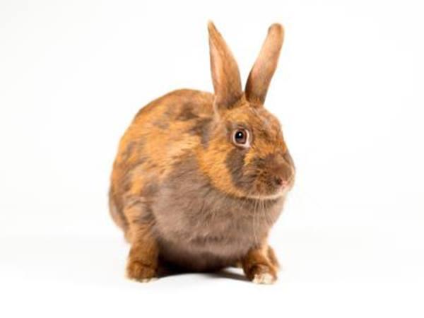 Merida the bunny